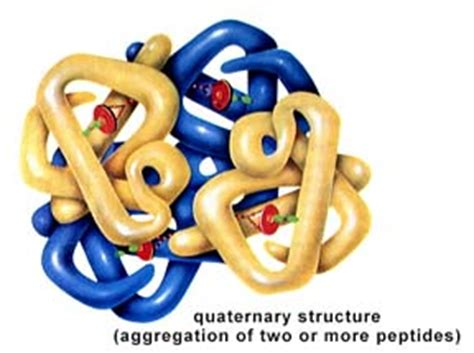 protein quaternary structure bonds lastly the protein s quaternary structure