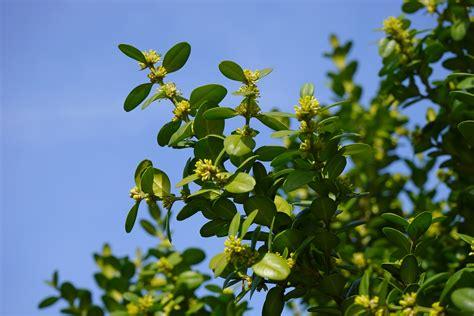 gambar alam cabang mekar book menanam buah daun