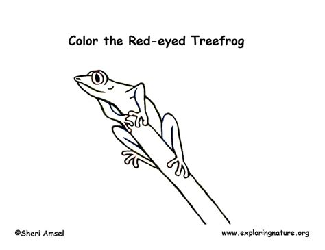 coloring pages of a red eyed tree frog rainforest animal printable coloring pages