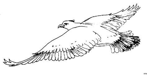 Fliegender Adler Ausmalbild & Malvorlage (Tiere)