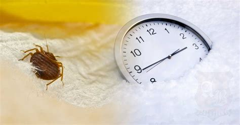 can bed bugs live in the cold does cold weather kill bed bugs 28 images does cold