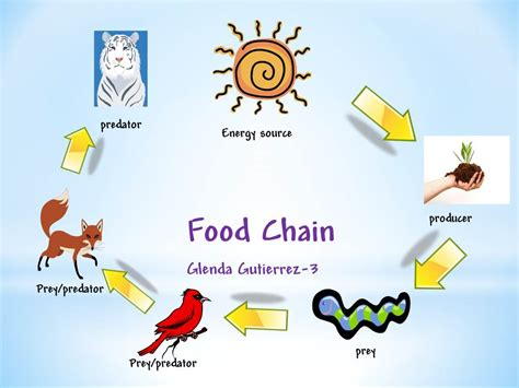 animal food chain diagram animal food chain diagram 28 images 5th grade learning