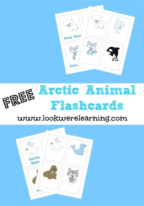 printable montessori flashcards 198 best images about antarctic and arctic ideas for kids