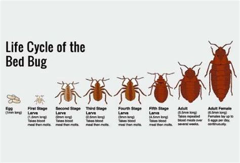 how hot to kill bed bugs how to get rid of bed bugs 101 6 easy steps you should