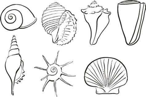 shell drawing examples hamptons seaside grey pinterest
