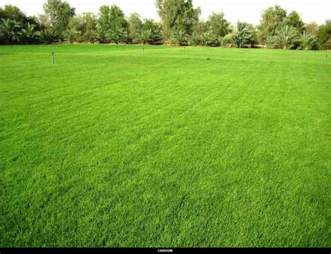 want to make your lawn back after winter