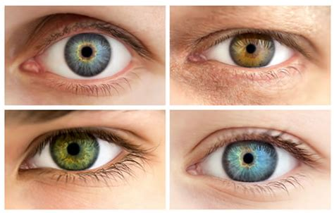eye colors list with pictures the most attractive and trustworthy features psyblog