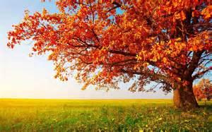 nature wallpaper hd for desktop free download full size