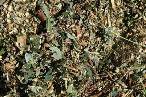 No Dig No Till Vegetable Gardening Harvest To Table No Till Vegetable Gardening