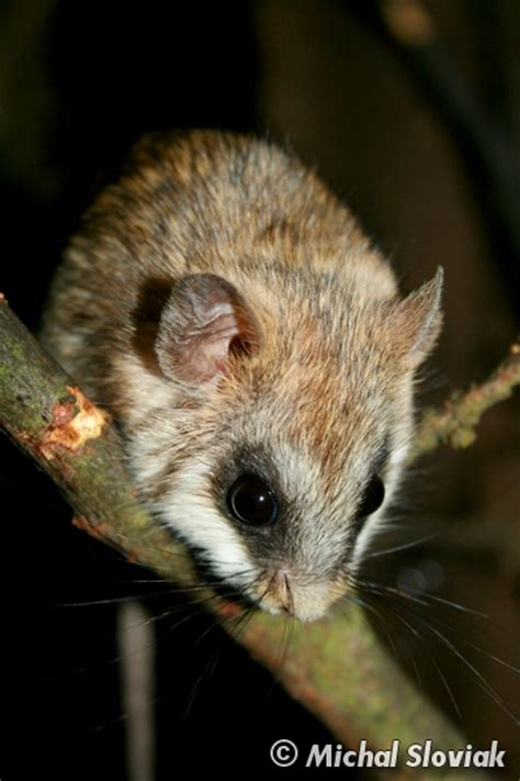 whats  small exotic pet  easy  care  cheap