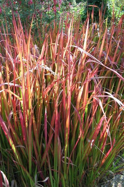 tuin van de baron plantenencyclopedie pinterest tuinen tuinplanten en tuin