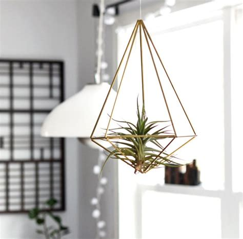 Air Plant Chandelier How To Display Air Plants In Hanging Containers