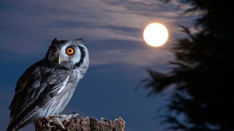 owl wallpaper for macbook night owl moon hd wallpaper desktop wallpapers 4k high