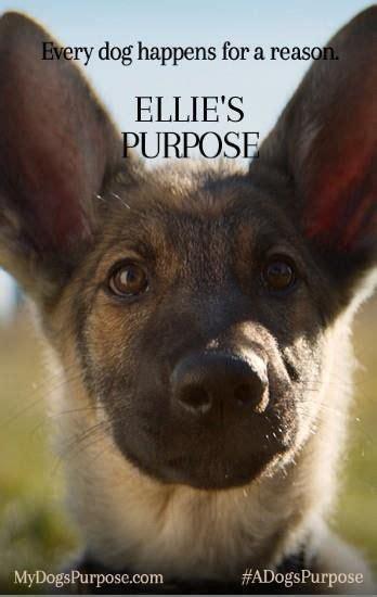 se filmer a dog s purpose 25 b 228 sta a dogs purpose movie id 233 erna p 229 pinterest bio