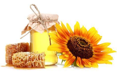Honey honeycomb bank sunflower white still life color