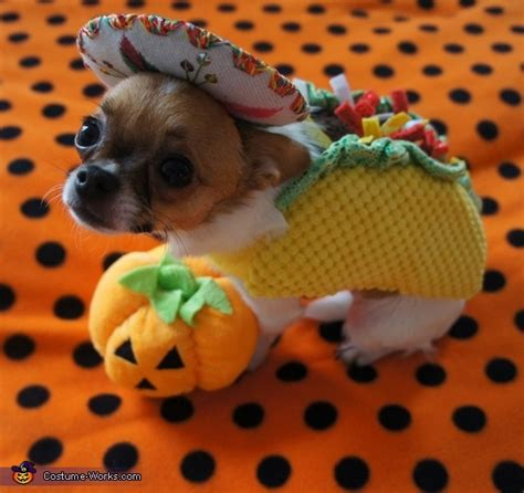 taco puppy taco rodeo cat costume photo 4 9