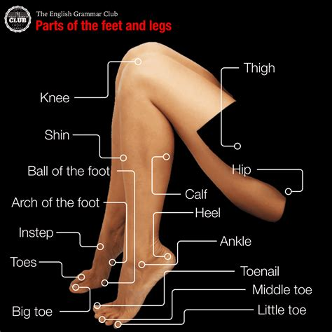 sections of the foot most comfortable walking shoes for men and women january
