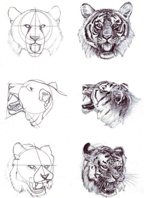 pattern drawing tiger tiger head how to draw como dibujar paso a paso