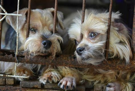 whats a puppy mill care dogs cats and animals