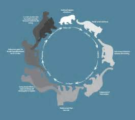 The leopard nikau s endangered species website