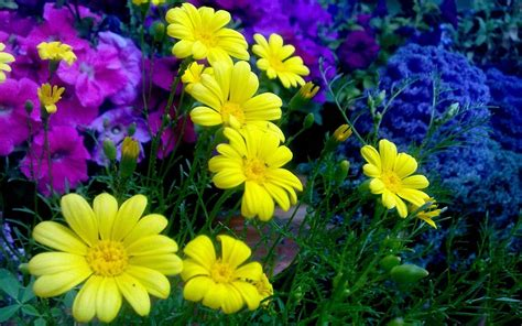 Colorful Wallpapers Of Flowers | colorful flower wallpapers wallpaper cave