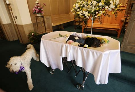 Pet Funeral Home by Funeral Home Holds Funeral For Grief Counselling 3milliondogs