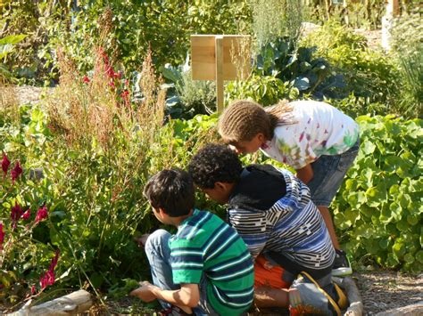cultivate health initiative helps  school garden
