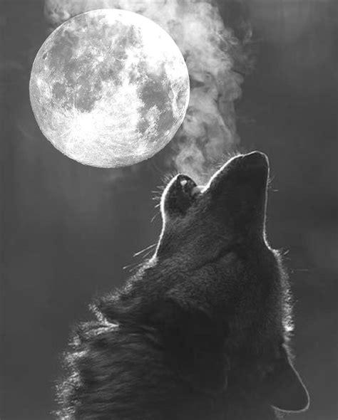 Wolf Moon by Wolf Moon Moon Www Imgkid The Image Kid Has It