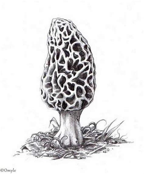 morel mushroom clipart 21
