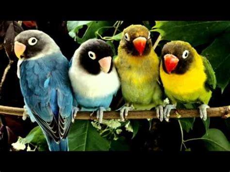 relaxing sounds birds youtube