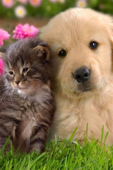 worldwide puppies and kittens 25 best ideas about dogs and cats on baby dogs adorable
