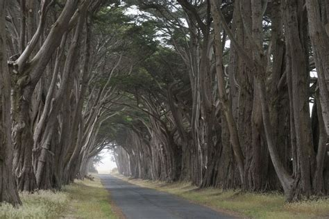 Garden Of Point Reyes Point Reyes In California United States Tree Tunnel