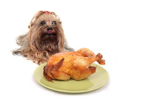 can dogs eat turkey can dogs eat turkey or is turkey bad for dogs to consume