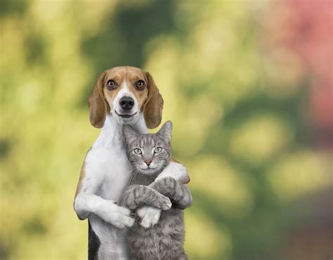 do cats and dogs get along why do dogs and cats each other why do they not get along metro news