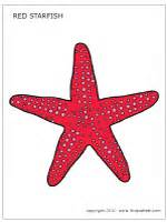starfish printable templates amp coloring pages firstpalette