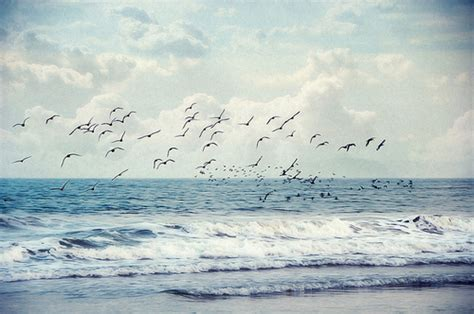 themes tumblr ocean ocean waves tumblr theme image search results