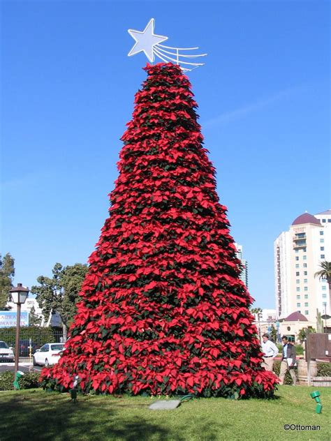 dec 24 2015 poinsettia christmas tree san diego
