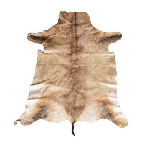 skin rug with for sale single skin rug hartebeest skin taxidermy mounts for sale and taxidermy trophies for sale