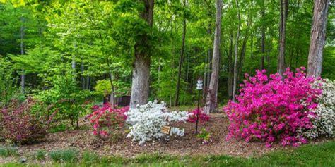 Garten Pflanzen Unter Nadelbäumen by Unter B 228 Umen Pflanzen So Gelingt Es Gartenmagazine De
