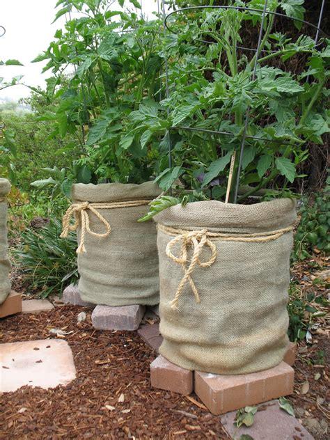 Burlap Bag Planter by Burlap Bags Tomato Planters Gardening Tips
