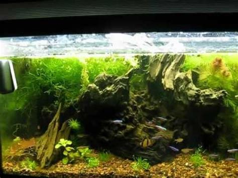 driftwood aquascape wild nature aquarium driftwood aquascape youtube