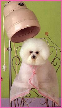haircuts and more belleview fl dog grooming belleview florida professional dog groomer