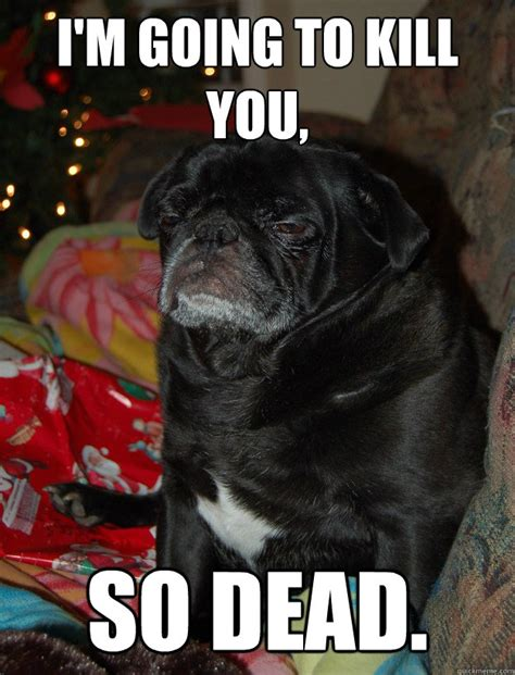 god is dead pug i m going to kill you so dead angry pug quickmeme