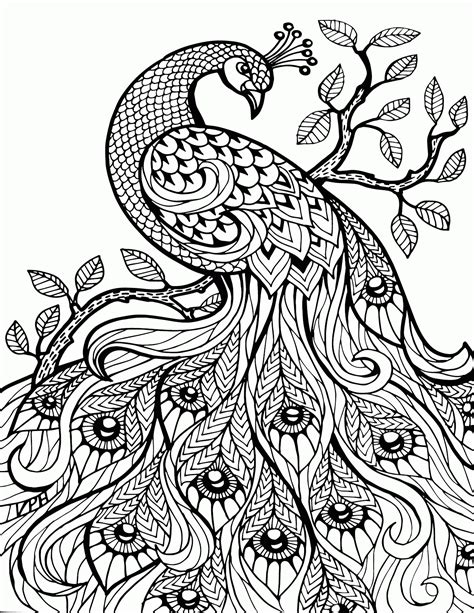for adults coloring pages peacock coloring home