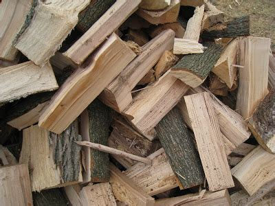 maple tree wood wisconsin firewood types