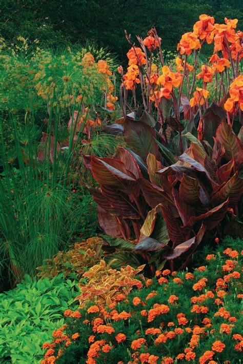 marigolds shade colored annuals coleus and marigold with orange