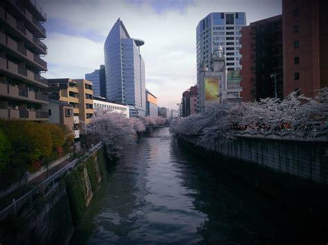 sakura  meguro river  meguro tokyo  yoshikazu