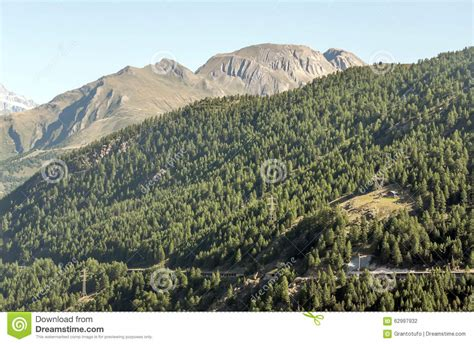 sunny day in the mountains a mountain of the alps switzerland before trees in the mountain stock photo image 62997932