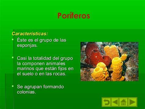 imagenes de animales poriferos los animales invertebrados3