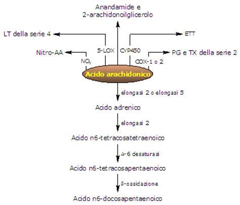 acido arachidonico alimenti acido arachidonico struttura sintesi infiammazione